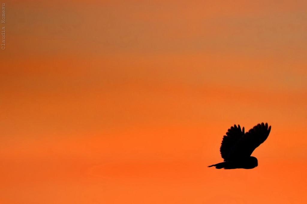 A luz já tinha acabado, mas de repente um caracará passou perto do mourão do mocho, e ele deu mais alguns voos.